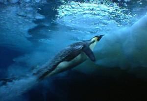 Penguins-Underwater-Rocket-Movement